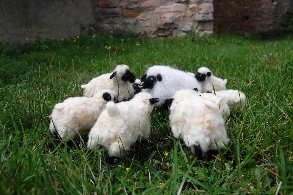 Emma, das Schaf aus weißer Filzwolle steht im Kreis von weißen Filzschafen im Gras